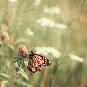 Release the butterflies