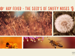 Hay fever - The seeds of sniffy noses