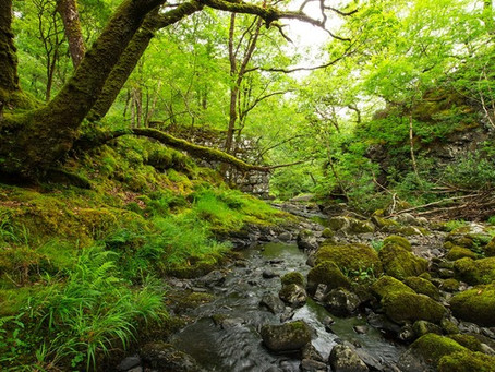 Wales Are Planning To Plant A National Forest That Will Span the Length and Breadth of the Country