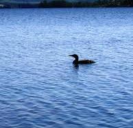 lac O'Malley 9