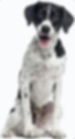 dog-cutout-5b194f5a504f2-24-2-2.jpg