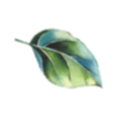 Leaf Bent 400x400 PNG.png