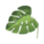 Leaf Wide 250x250 PNG.png