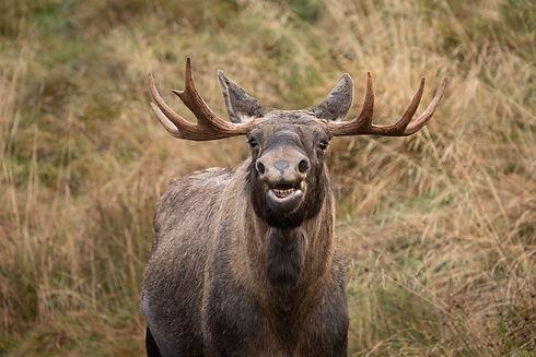 Highland Wildlife Park.jpeg