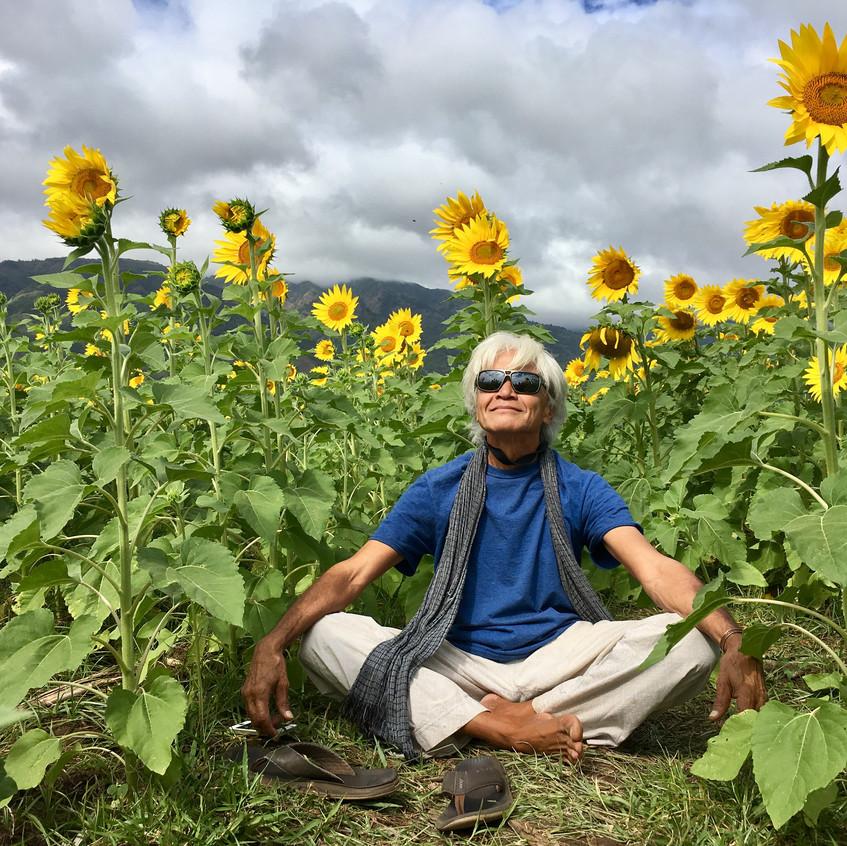 sunflowers7