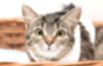 Ника, кошка, 1 год.jpg