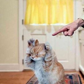 Как правильно наказать кошку?
