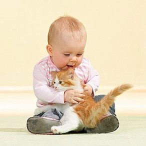 Учимся дружить. 7 правил обращения с кошкой для взрослых и детей