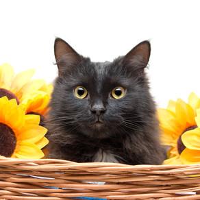 6-ая выставка кошек, которые хотят домой, завершилась!