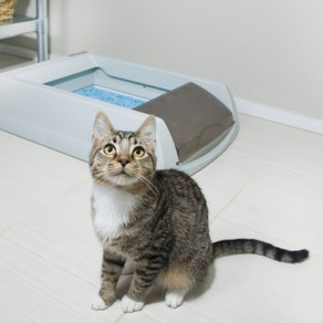 Почему кошка «ходит» мимо лотка?