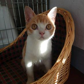 Зачем нужна кастрация котов и кошек, и чем отличается стерилизация от кастрации?