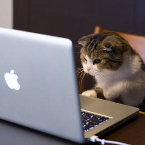50 поразительных фактов о котиках