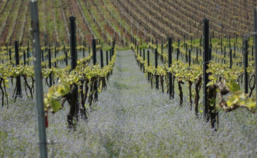 Vignes et vins de Champagne