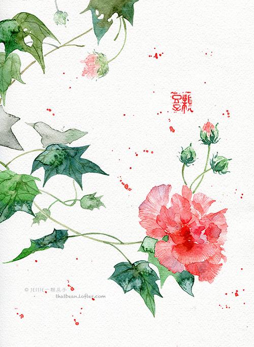Cottonrose Hibiscus