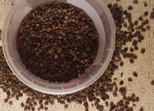 Green Cardamom Seed 40g