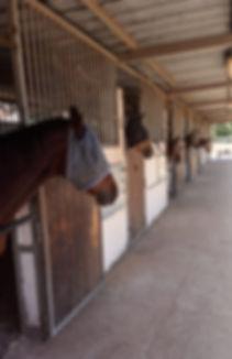 פנסיון הסוסים בחוות הסוסים כישורית