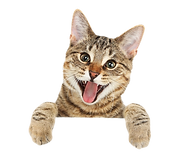 311-3116406_cat-png-free-download-cute-c