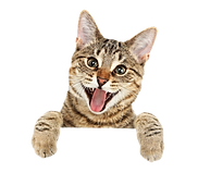 311-3116406_cat-png-free-download-cute-c