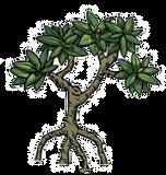 Mangrove%20Fishing%20Tours%20-%20Jaco%20