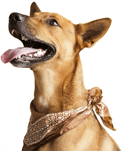 groomax-dog-slider1.png