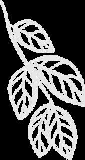 leaf27.png
