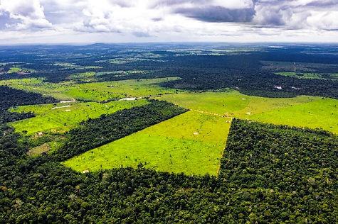 soy farms.jpg