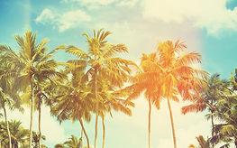 Palmiye Ağaçları ve Soluk Sky