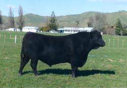 Springdale Herco 05763