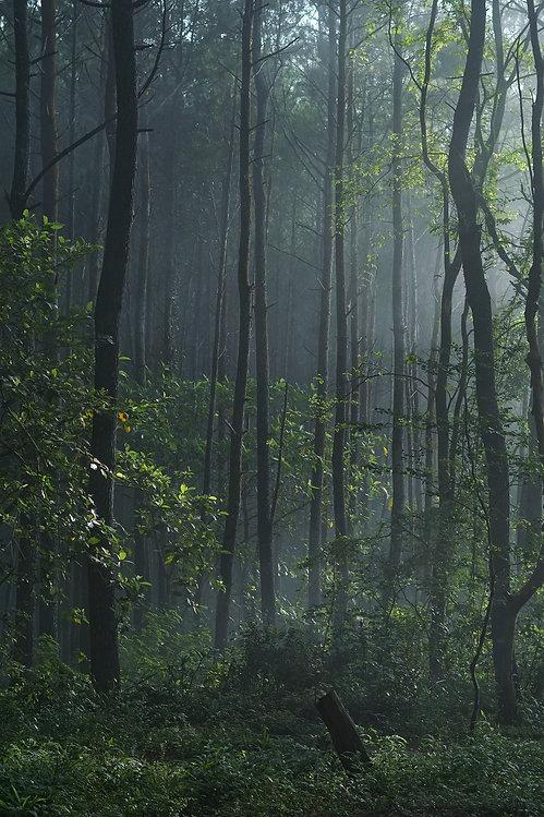 wild-forest-9.jpg