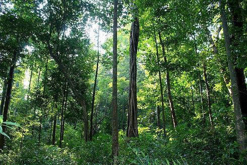 jungle-bath-forest-wild-mahseer-1.jpg