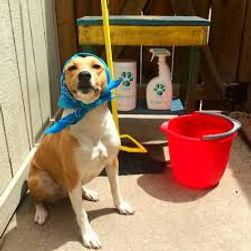 DogClean.jpg