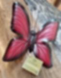 IMG_20190920_172011112_edited_edited.png