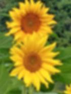 IMG_20190211_190822767_HDR_edited_edited_edited.jpg