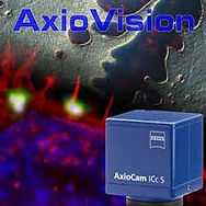 download axiovision.jpg