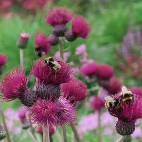 A garden good for wildlife - Do's and Don'ts
