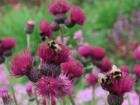 A garden good for wildlife - Do's and Don'ts