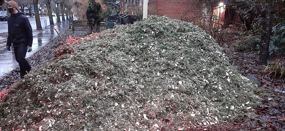 mulch pile in front.jpg