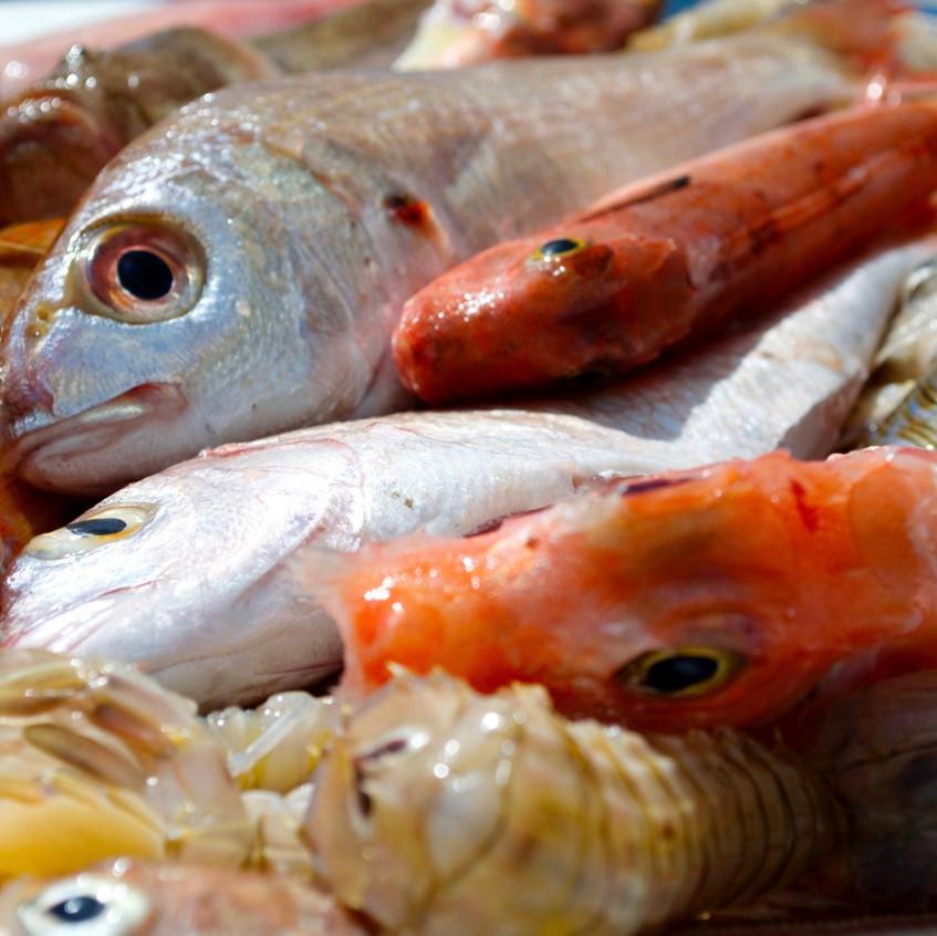 Zuppa di pesce #2