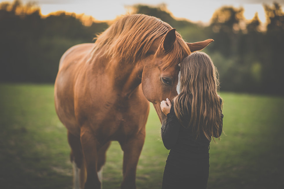 Cute little girl with her horse on a lov