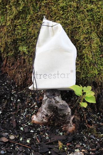 treestar_ moss.jpg