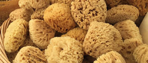 natural sea wool sponge*
