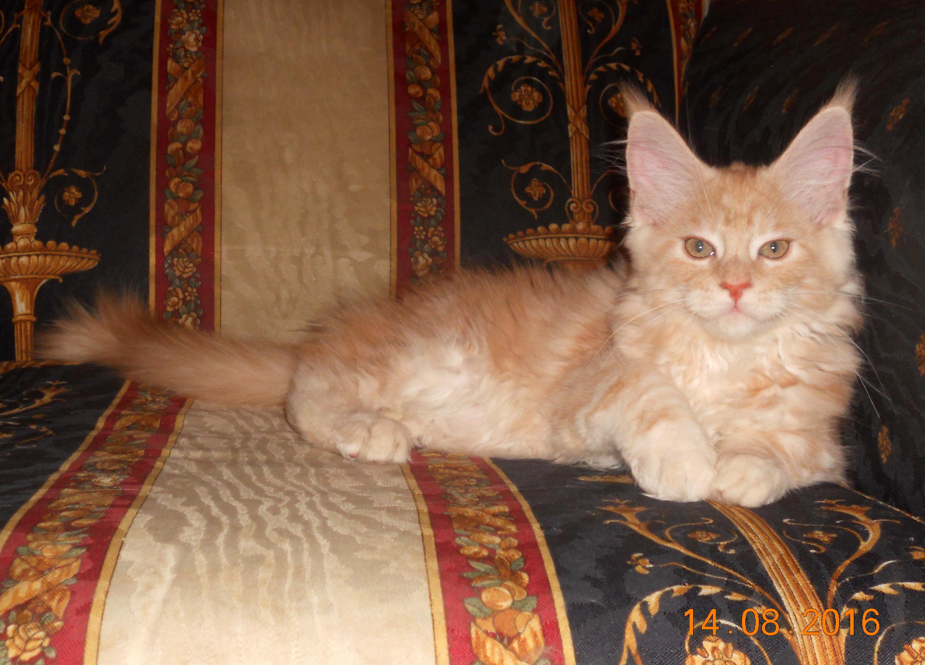 Kunarmy Karamell