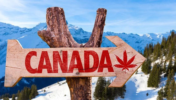 WILL CANADA LEAVE CANNABIS TOURISM HIGH OR DRY?
