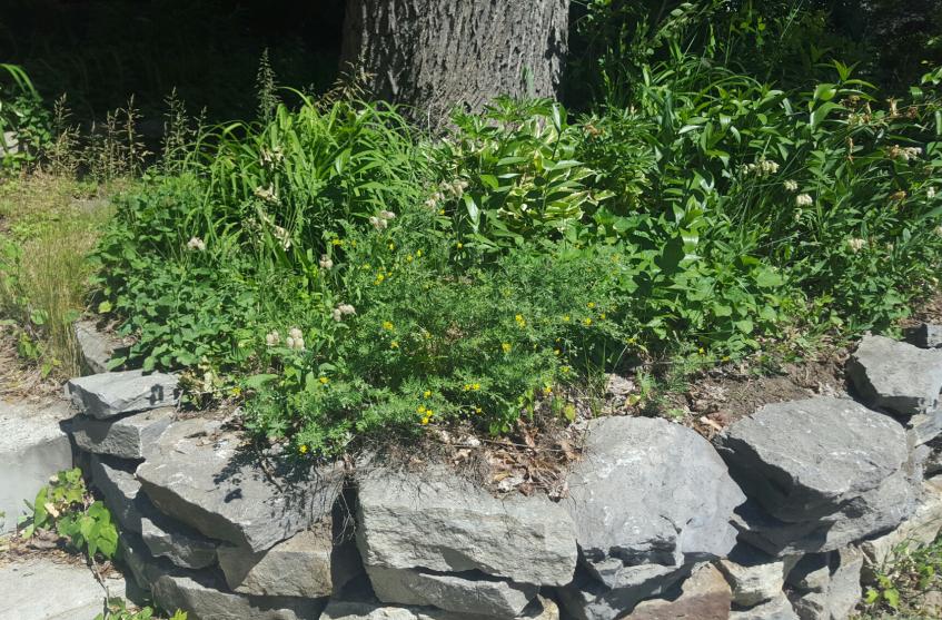 In need of garden rejuvenation