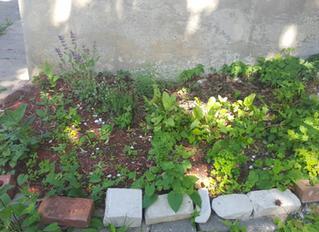 Garden Rejuvenation on Fairmont