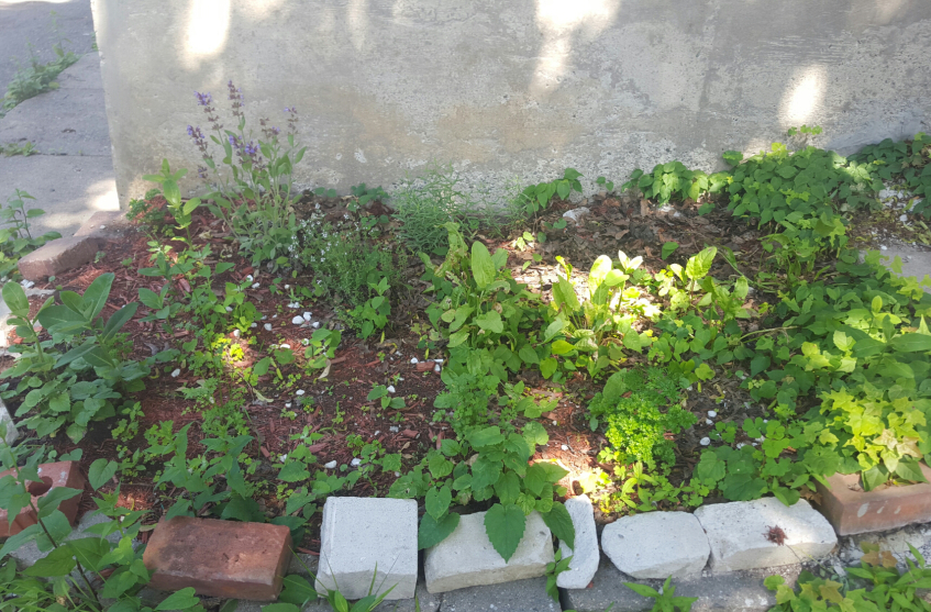 Garden Makeover before Weeding
