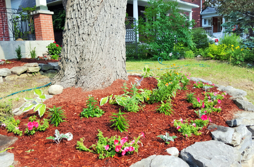New Flowerbeds with beautiful mulch