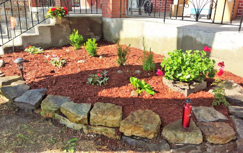 Rejuvenated garden with mulch