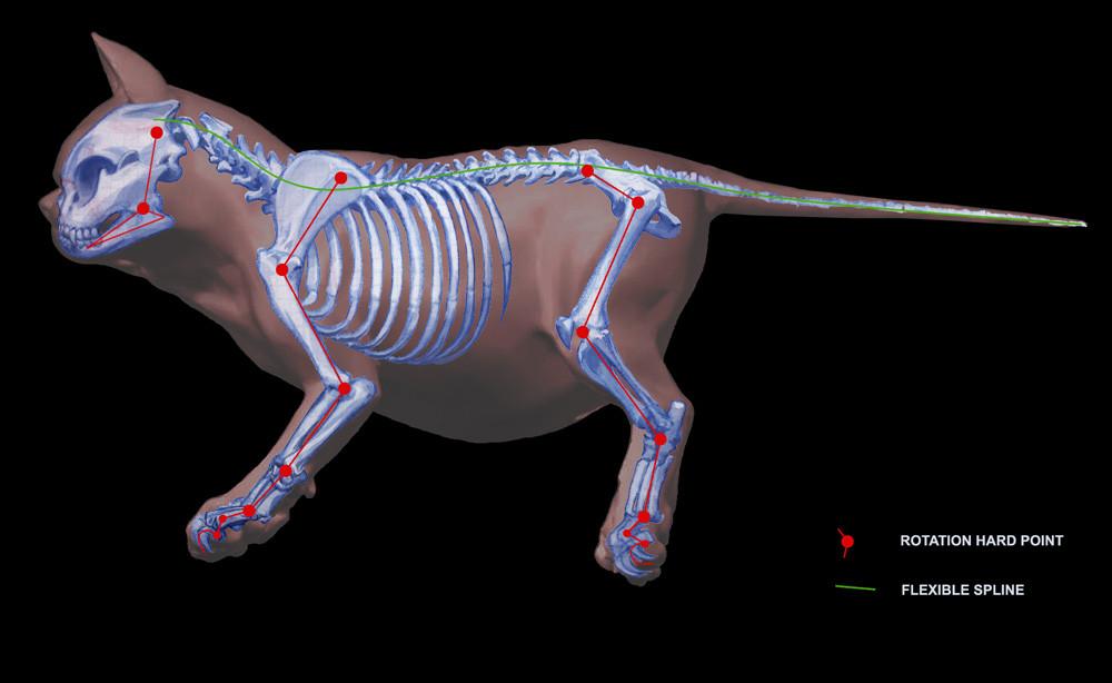 catSkeleton.jpg