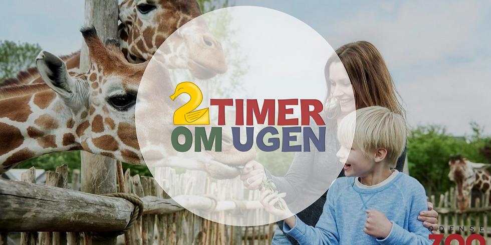 Udflugt til Odense Zoo